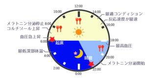 体内時計(サーカディアンリズム)